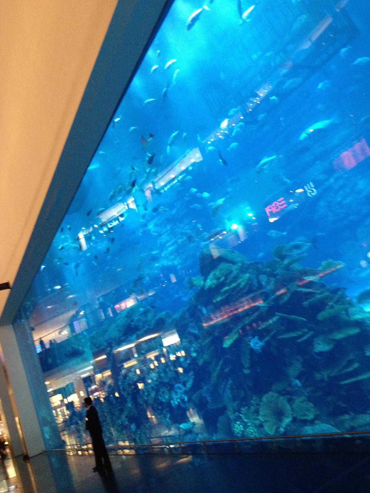 2nd largest aquarium in world zayed energy environment research center